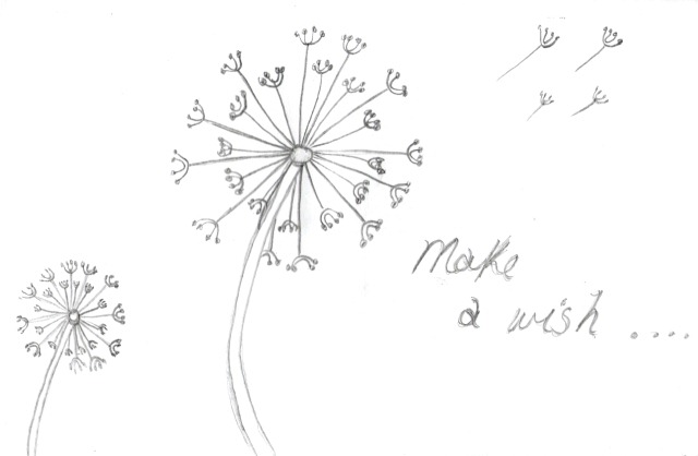 Dandelion drawing pictures to pin on pinterest pinsdaddy for How to draw a dandelion step by step